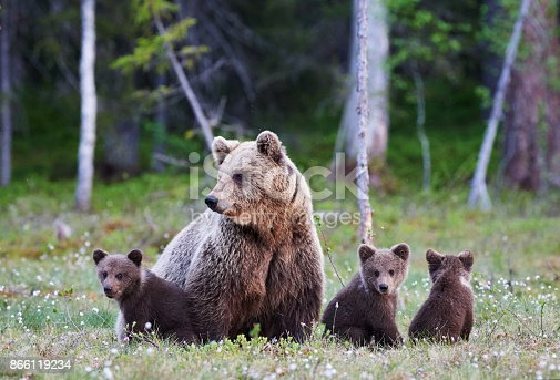 istock Mummy bear and her three little puppies 866119234