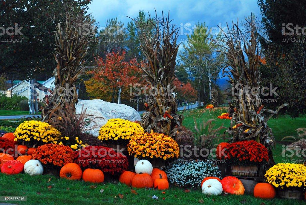 Mums and pumpkins of autumn stock photo