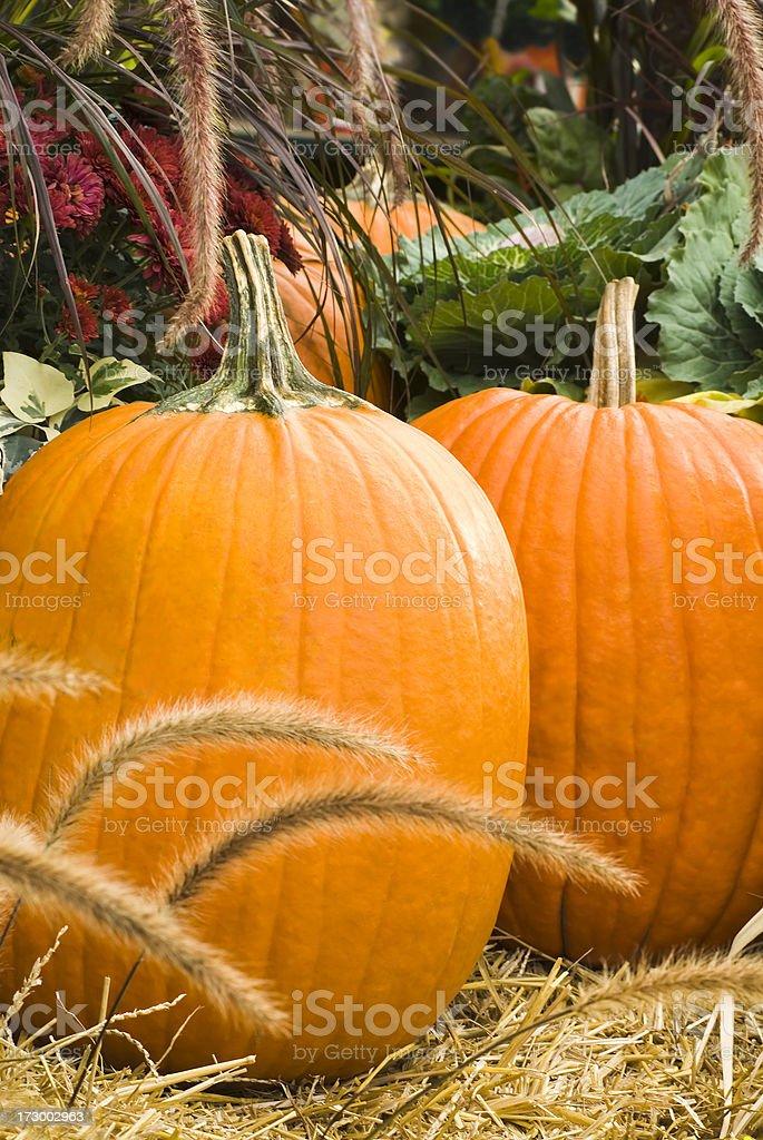 Mums, Grass and Pumpkins royalty-free stock photo