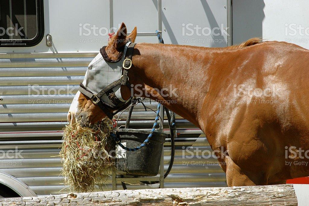 Munching hay stock photo