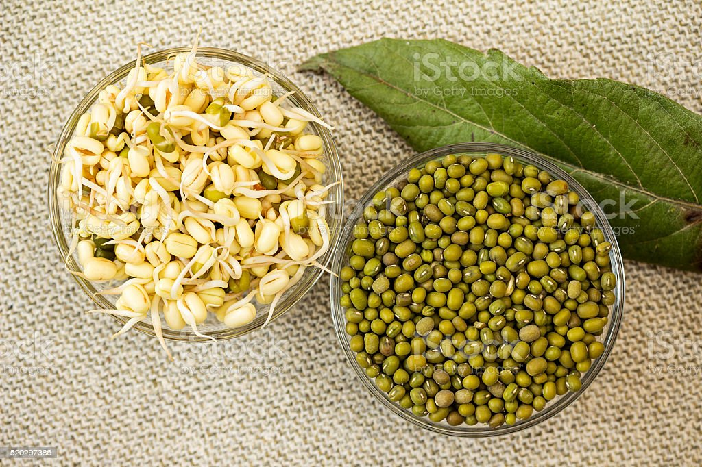 Mung bean sprouts and mung bean dry. stock photo