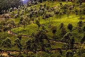 Beauty of Munnar...