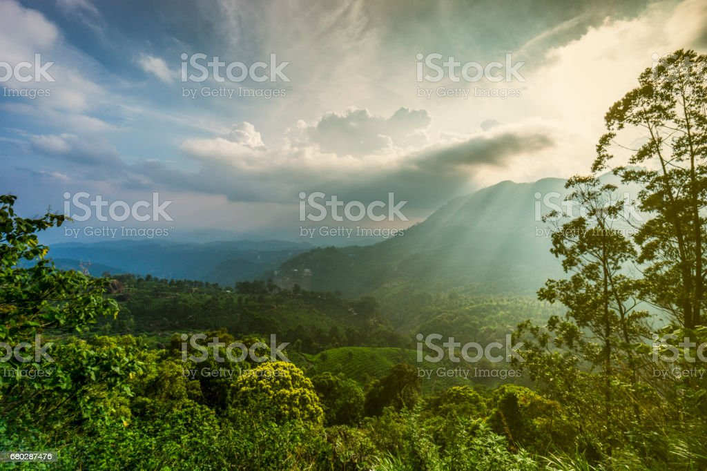 Munnar tea plantation in South India's Kerala region, where the Western Ghats mountains are visible in the background. stock photo