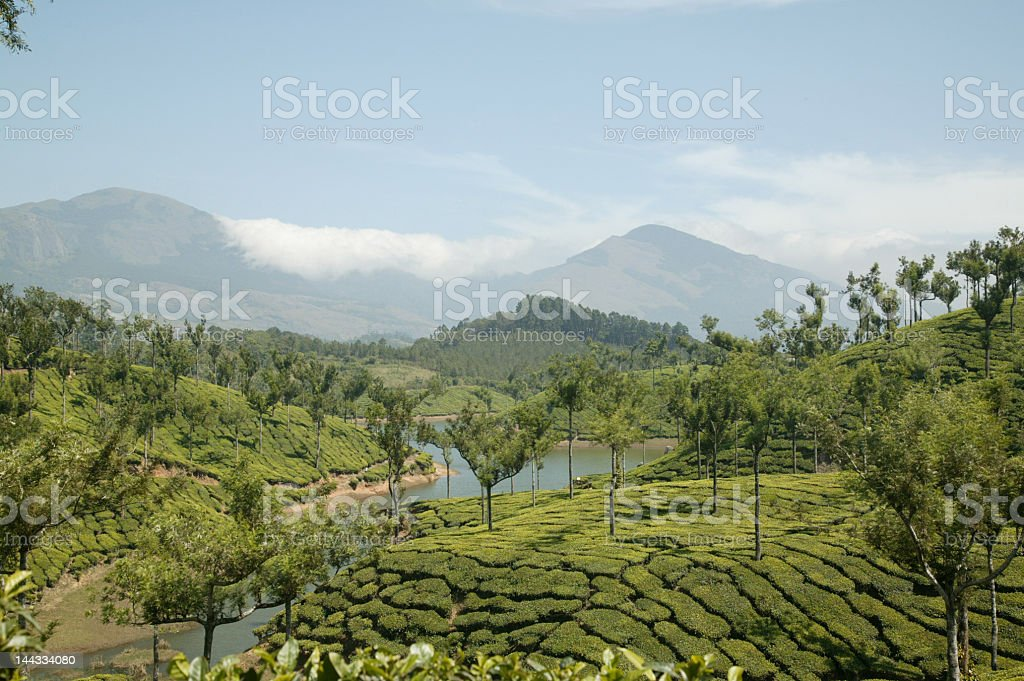 Munnar Teascape royalty-free stock photo