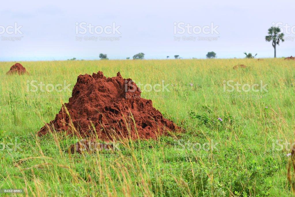 Murchison falls national park landscape, Uganda, Africa stock photo