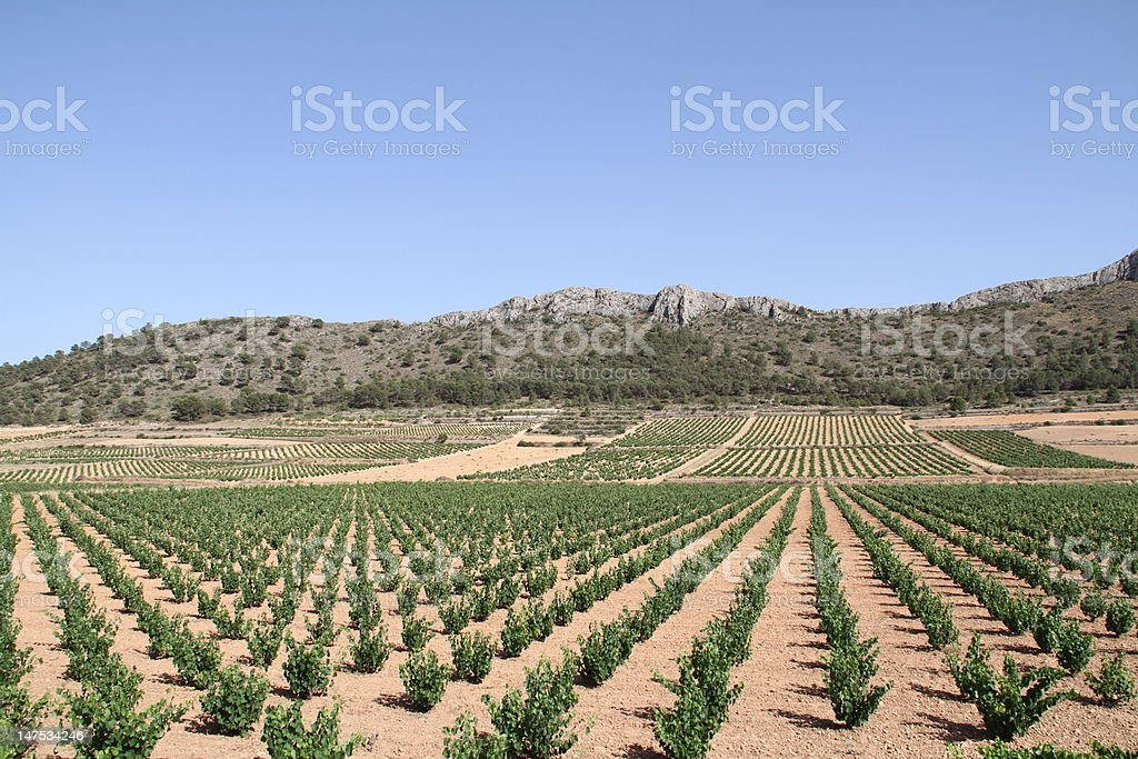 Murcia vineyards stock photo
