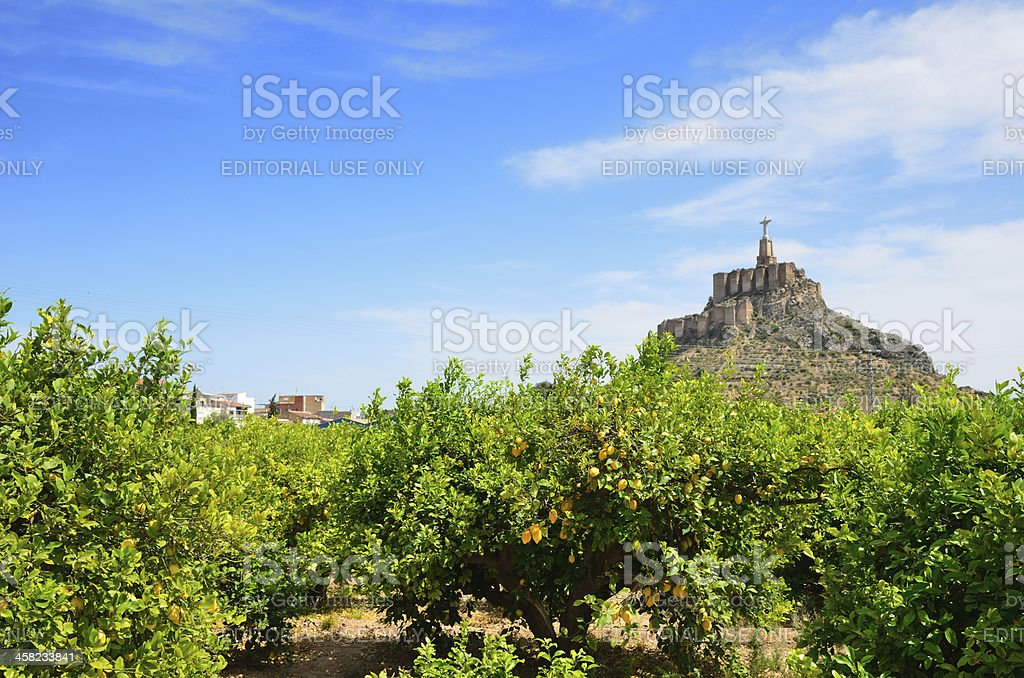 Murcia's lemon orchard against the hill of Monteagudo stock photo
