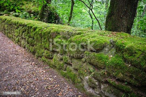 Uso di blocchetti semi-sbozzati in muro ad opera poligonale parzialmente coperto da muschio.