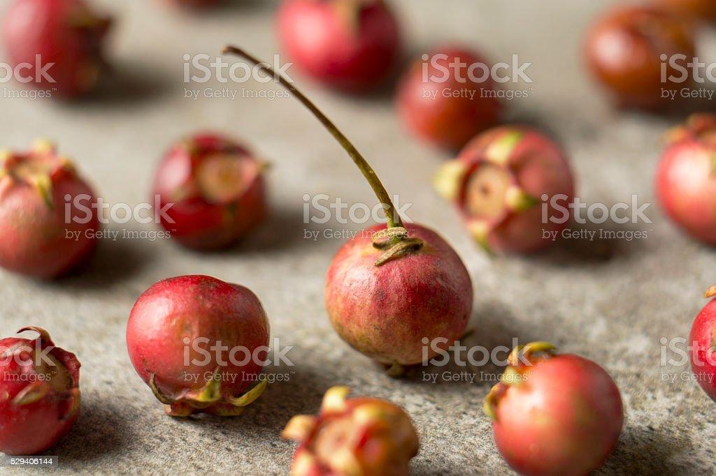 Murta fruit stock photo