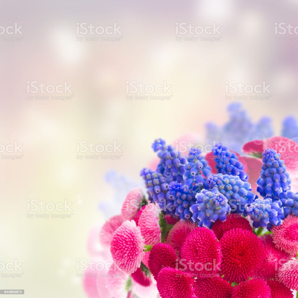 Muscari And Daisy Flowers Stock Photo More Pictures Of Arrangement