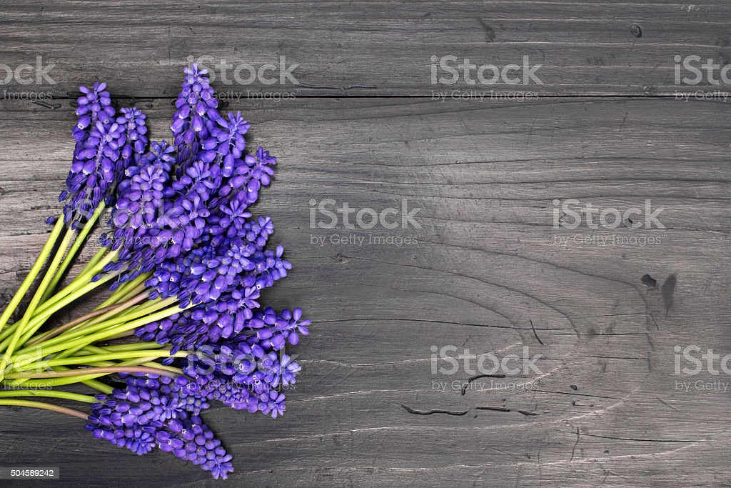 Muscari bouquet on a dark wooden table stock photo