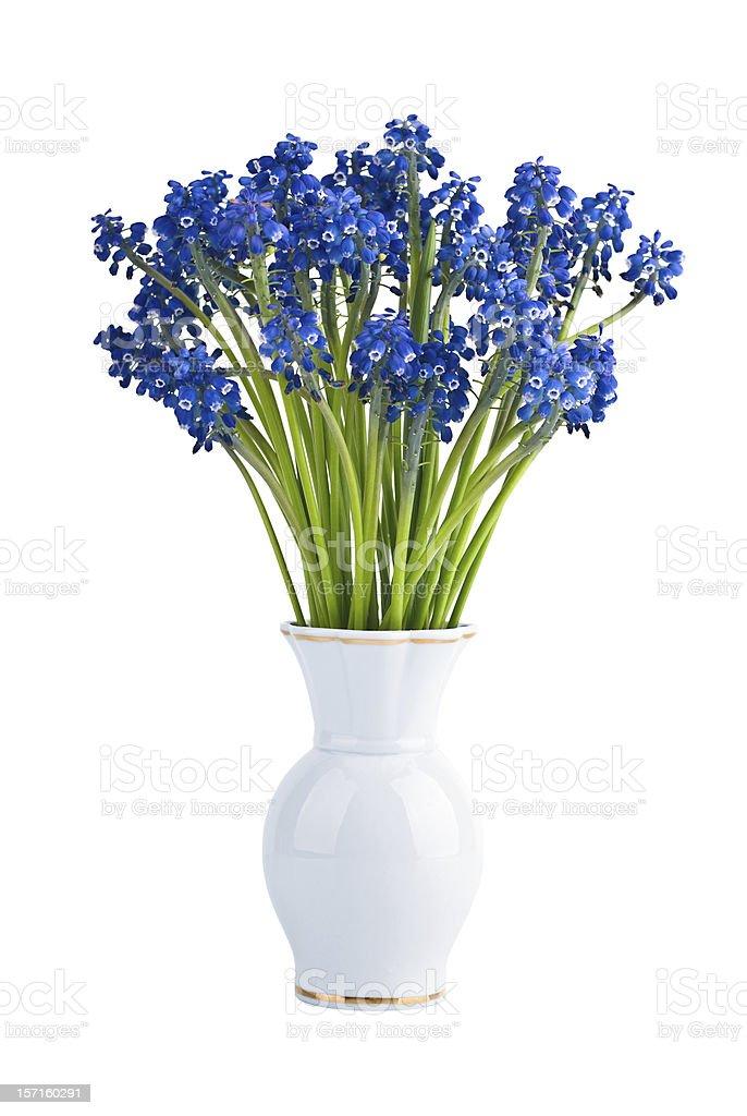 Muscari flowers in vase stock photo