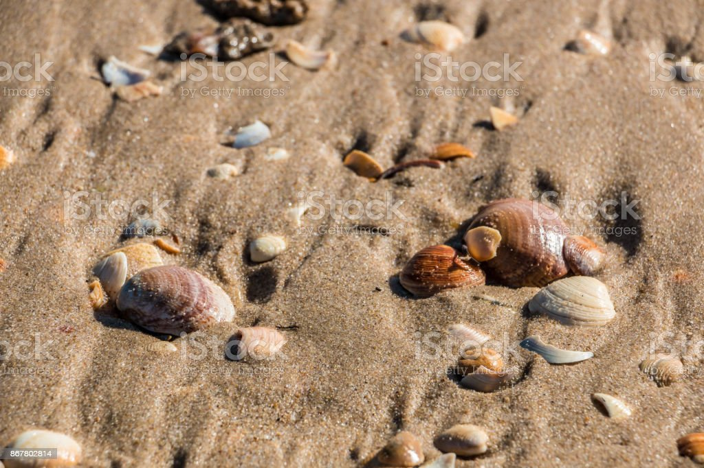 Muscheln am Strand – Foto