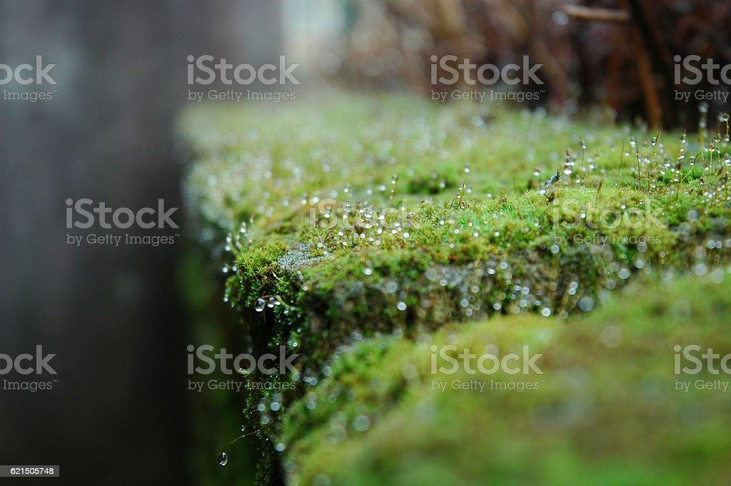 Muschio Lizenzfreies stock-foto