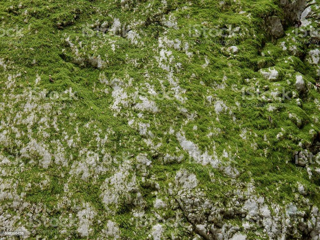 Muschio su roccia royalty-free stock photo