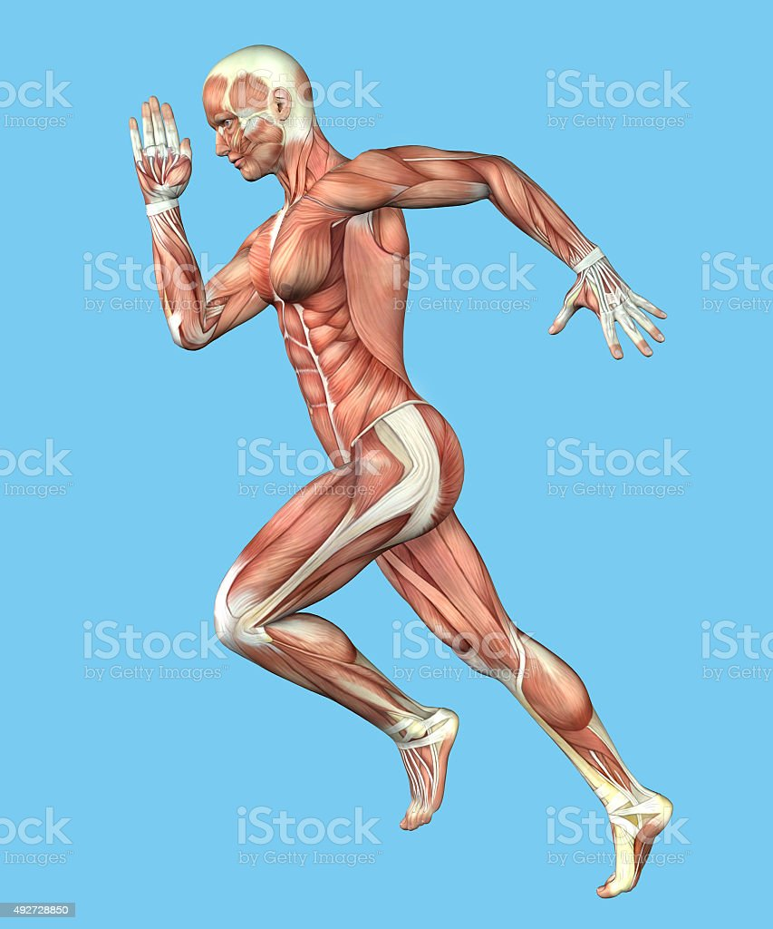Muscle Anatomy of Male in Running Motion stock photo
