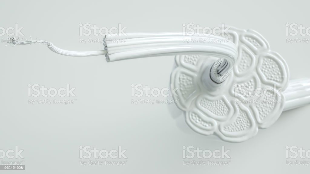Muscle cross section in close up view with high degree of detail - 3D Rendering stock photo