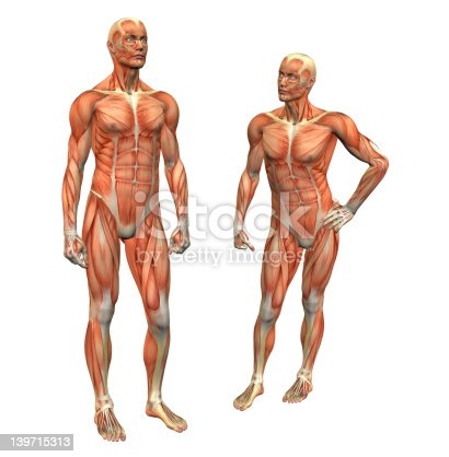 istock muscle man 2 w/ clipping mask 139715313