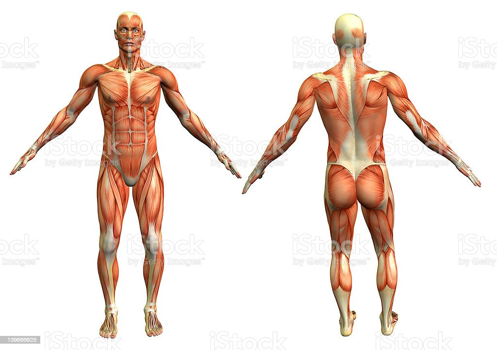muscle man 4 royalty-free stock photo