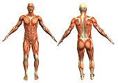 istock muscle man 4 139666625