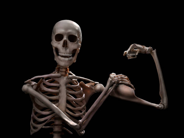 muscle skeleton workout stock photo