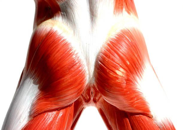 Muscles - Butt stock photo