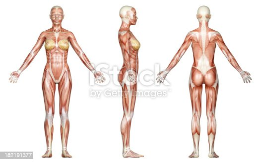496193203istockphoto Muscles of a slim woman, for study 182191377