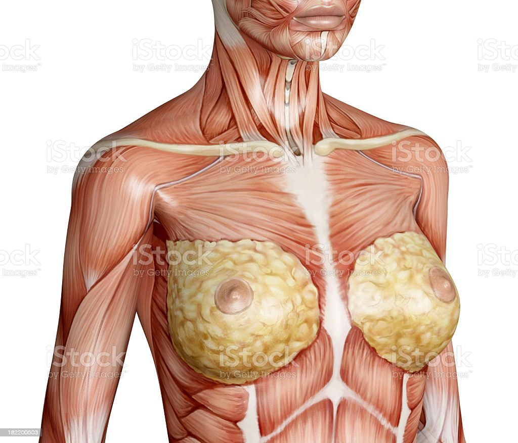 Muscles Of Female Torso Breast In Focus Stock Photo & More Pictures ...