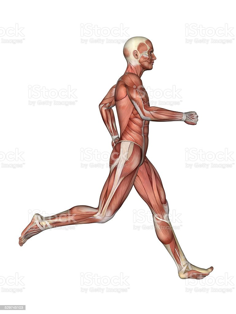 Muscles Of Male Anatomy In Motion Stock Photo More Pictures Of