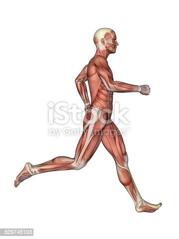 496193187 istock photo Muscles of Male Anatomy in Motion 529745103