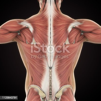 istock Muscles of the Back Anatomy 1125840791