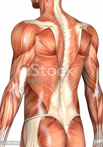 istock Muscular back of a man 172844569
