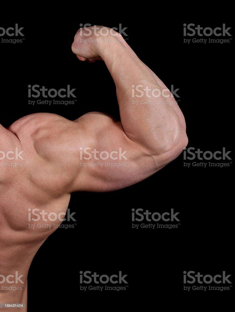 Muscular biceps royalty-free stock photo