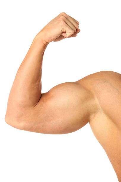 muscular biceps - human arm stock pictures, royalty-free photos & images