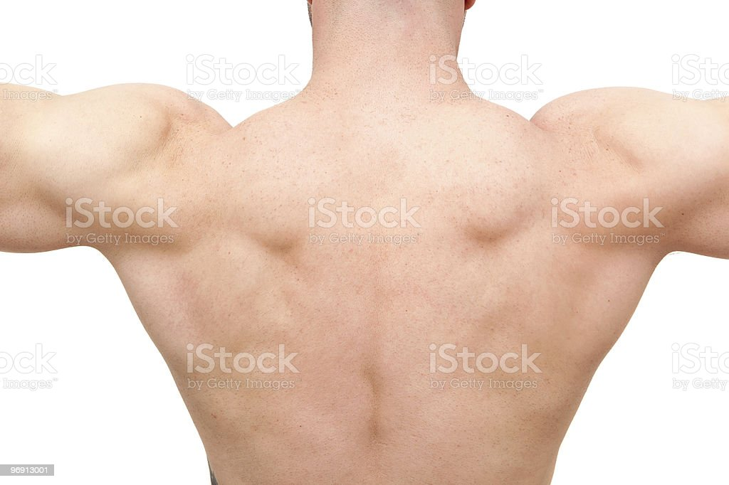 Muscular body builder man royalty-free stock photo