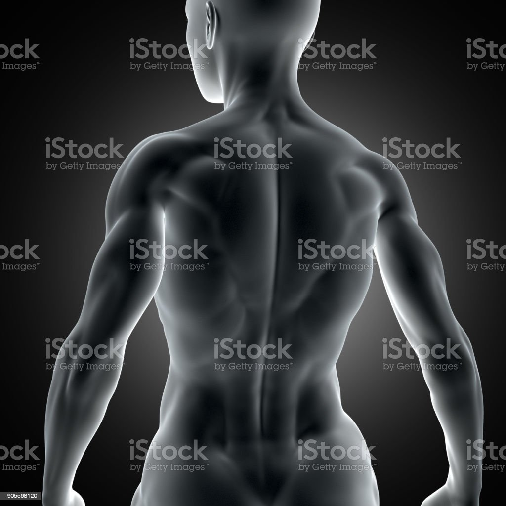 3D muscular female figure with close up of back muscles stock photo