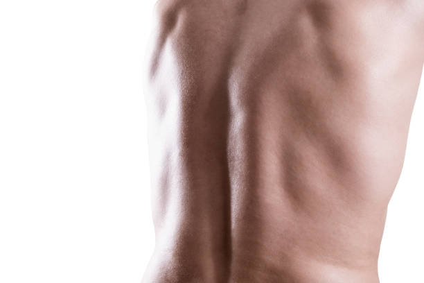 Muscular male back isolated on white background stock photo