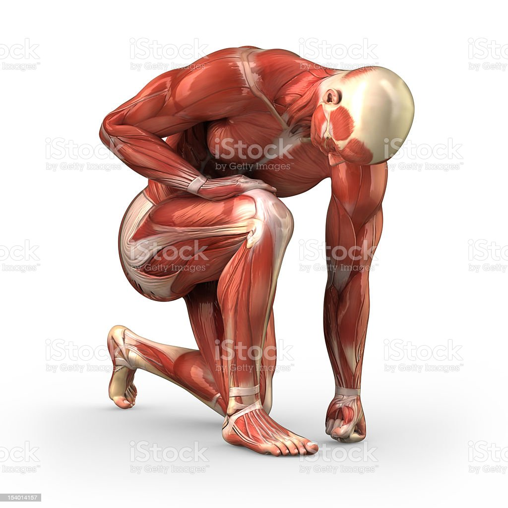 Muscular male with visible muscles - clipping path stock photo