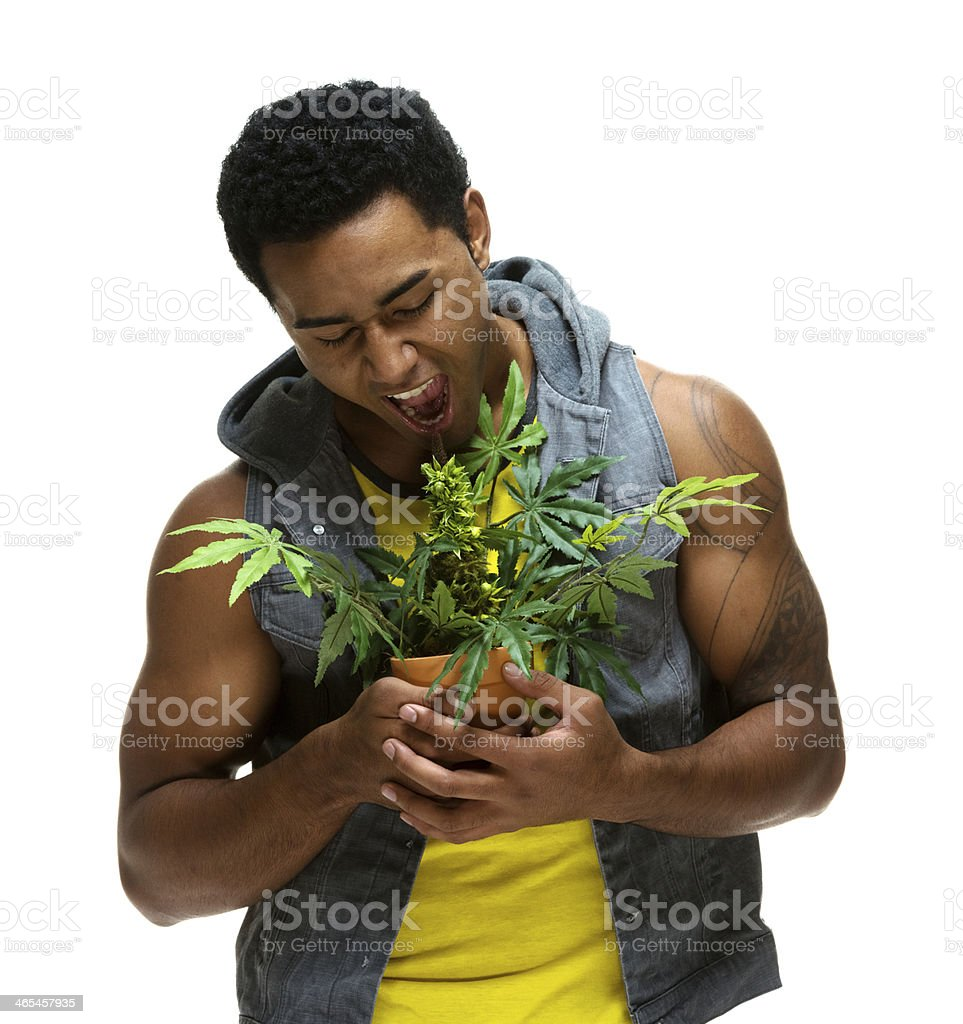 Muscular man holding marijuana plant royalty-free stock photo