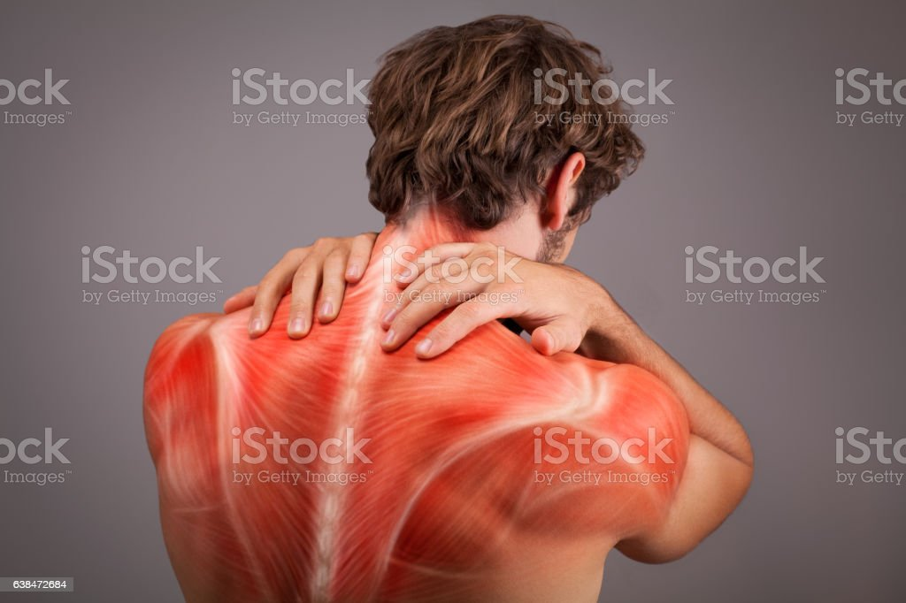 Musculature illustration of athlete back and shoulders stock photo