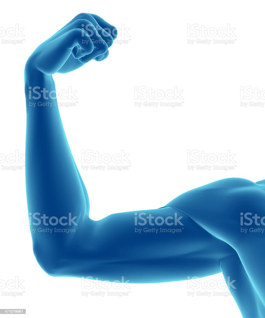 Musculature of the human arm royalty-free stock photo