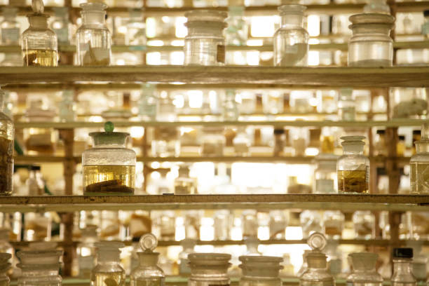 Museum shelves with specimens preserved wet in glass jars of formalin Jarred animals in a scientific collection of biological samples specimen holder stock pictures, royalty-free photos & images