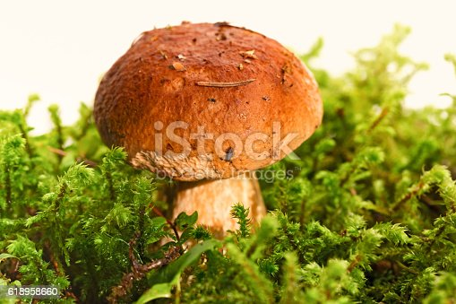 istock Mushroom among a green moss, on a white background 618958660