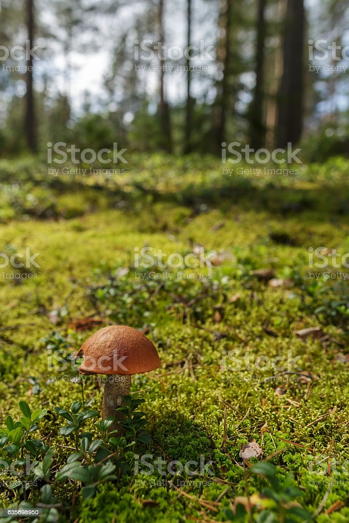 mushroom and cranberries  leaves up close royalty-free stock photo