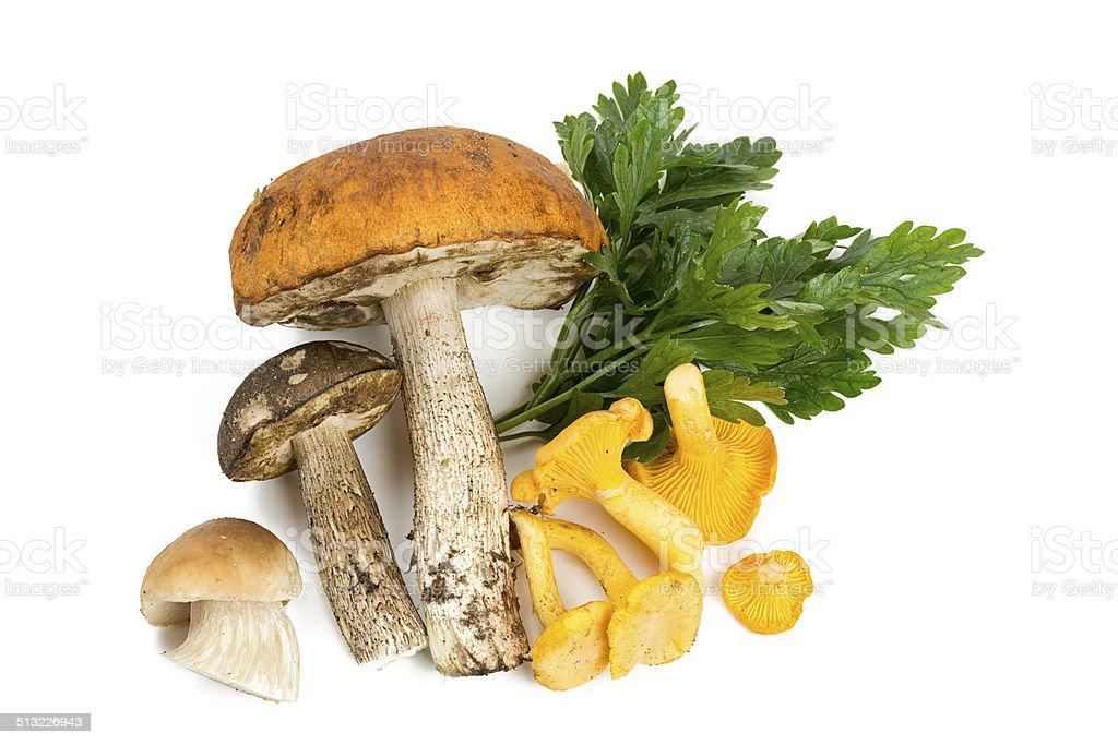 mushroom and parsley leaves stock photo