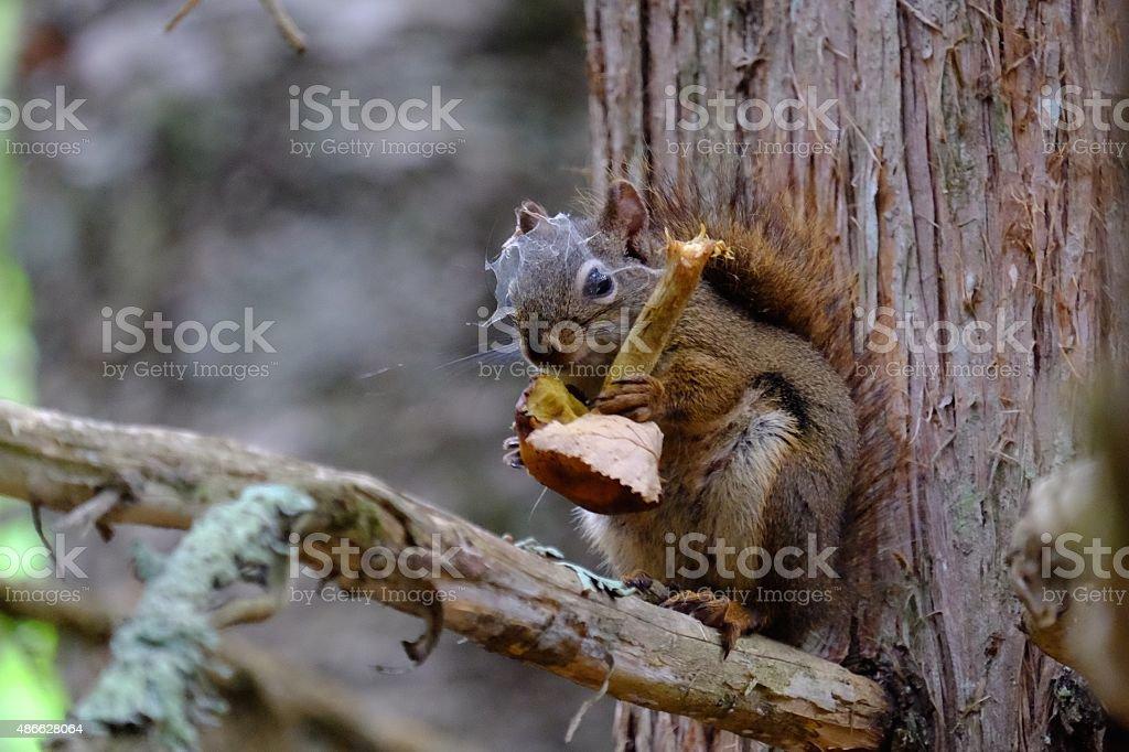 Mushroom and Squirrel stock photo