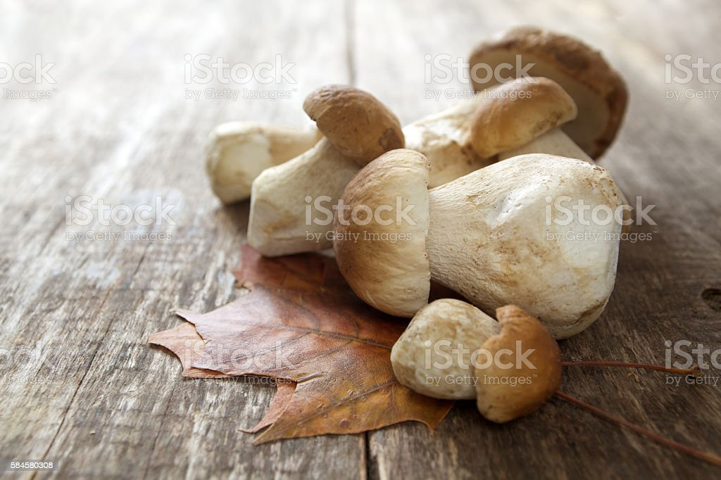Mushroom Boletus over Wooden Background stock photo