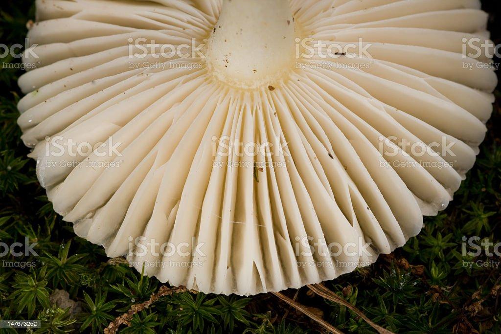 Mushroom Cap royalty-free stock photo