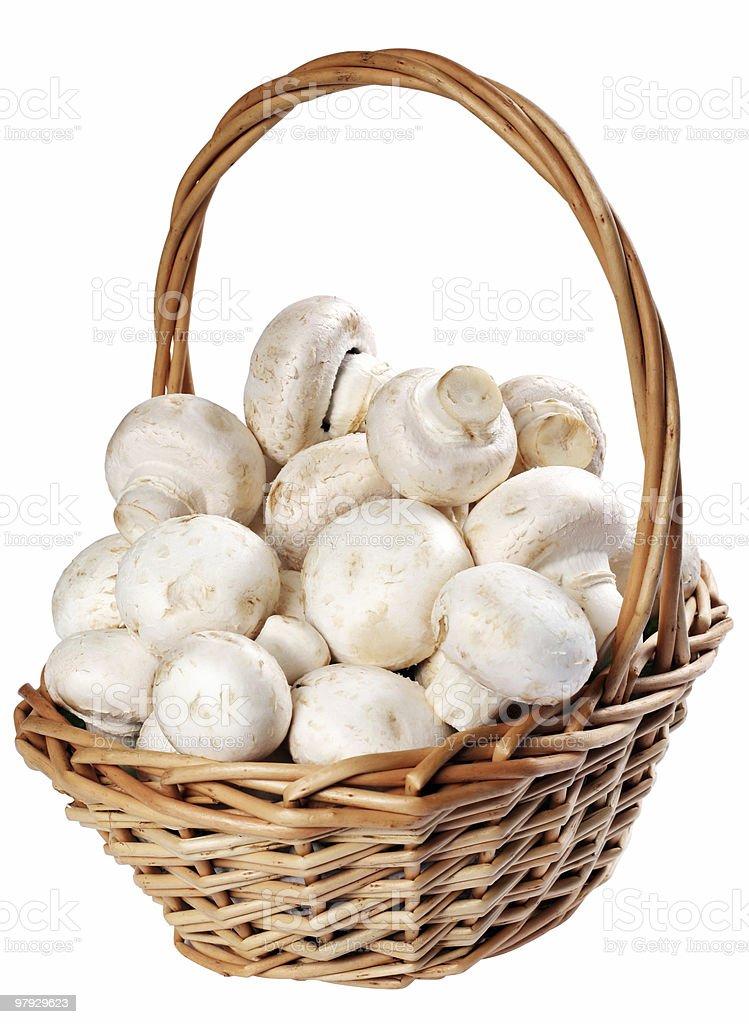 Mushroom champignon royalty-free stock photo