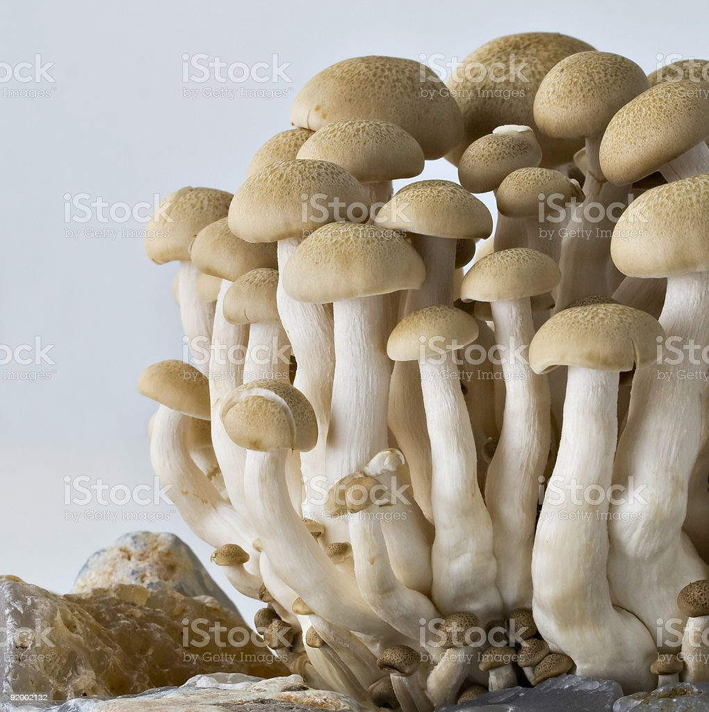 Mushroom clump square frame royalty-free stock photo